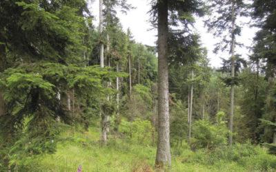 Témoignage Groupement Forestier PPL
