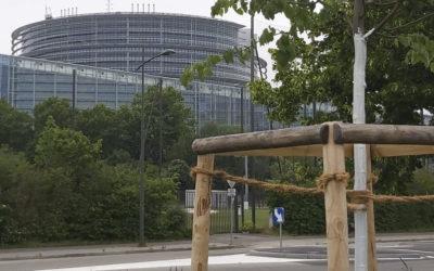 Protection des arbres en ville