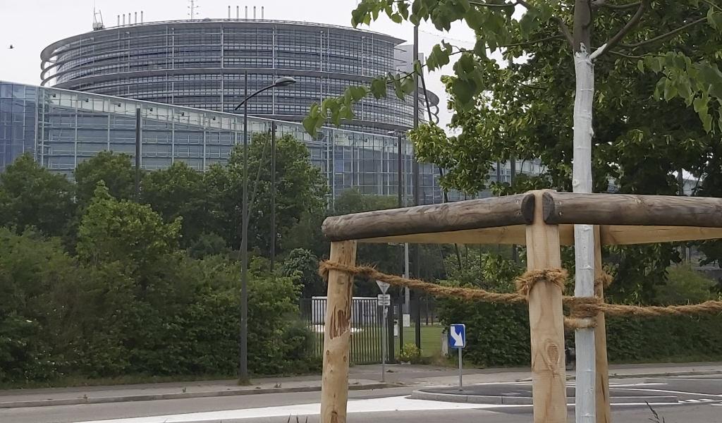 Protection des arbres en ville_elaf solutions